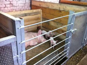 Инструкции и рекомендации для строительства свинарника своими руками