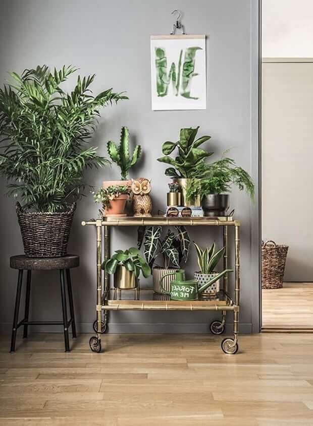 Установив комнатные растения на передвижной столик вы получите мобильный живой уголок который при желании можно переместить в другое место
