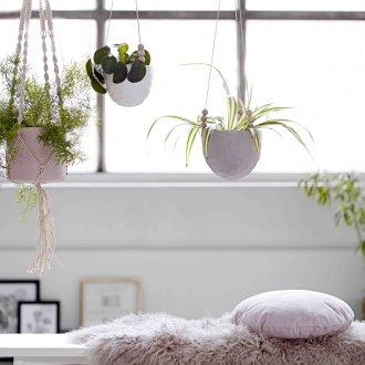 Подвесные комнатные растения