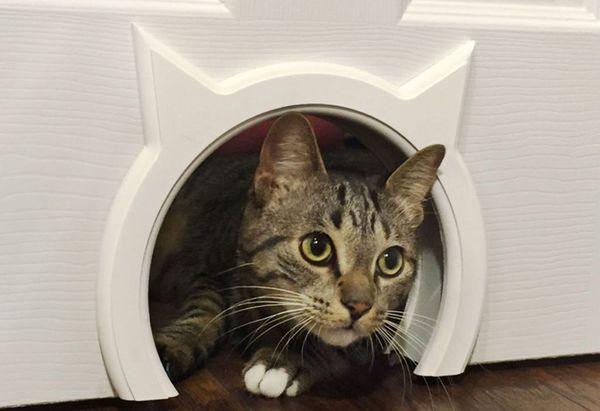 Лаз – самый простой вариант дверей для кошек