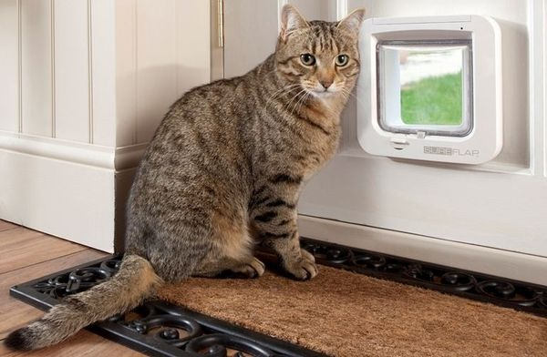 Фиксированная дверца для кошек - самая надежная