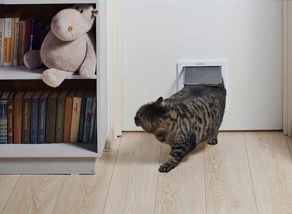Окошко отличается от лаза наличием подвижной дверцы