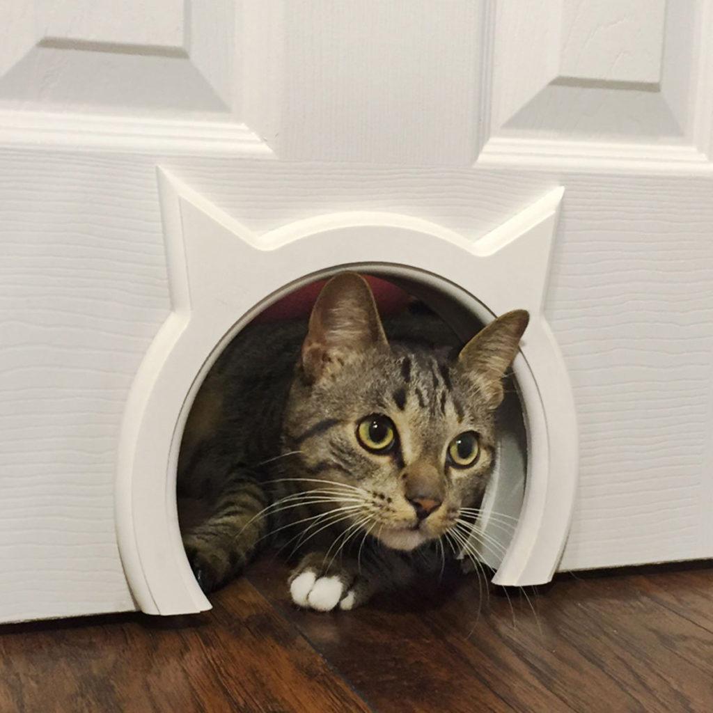 Серая кошка смотрит сквозь отверстие в стене
